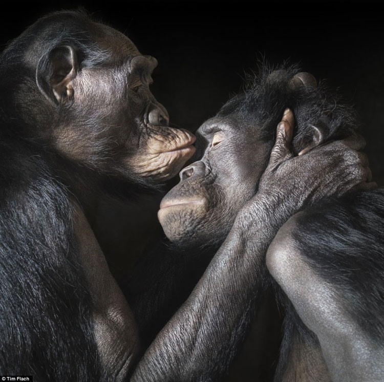 yellowtrace_More-Than-Human_animal-photography-by-Tim-Flach_01