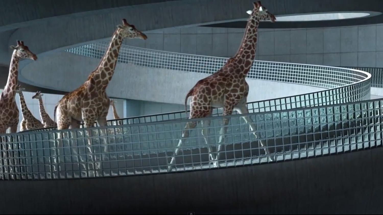 5m80: High Diving Giraffes | Yellowtrace.