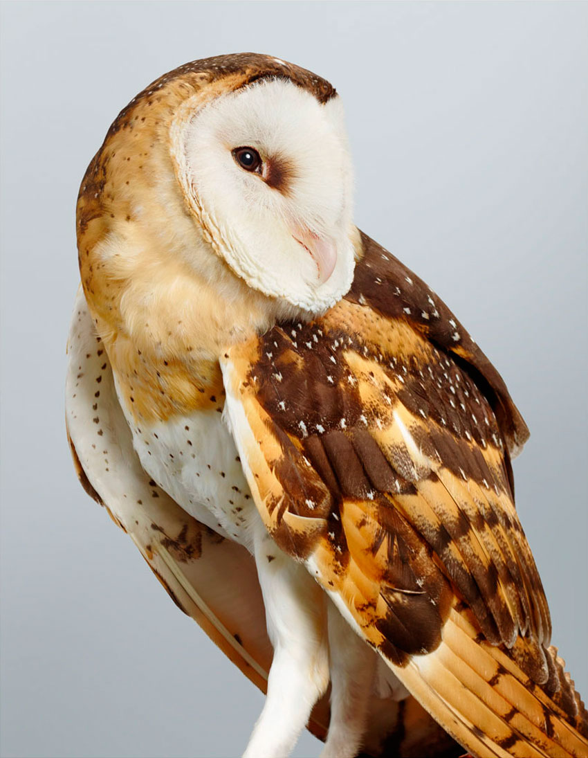 'Duke' Grass Owl by Leila Jeffreys   Yellowtrace