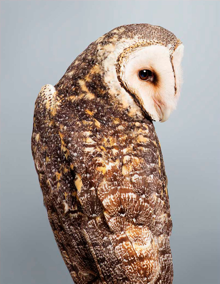 'Tani' no 3 Masked Owl by Leila Jeffreys   Yellowtrace
