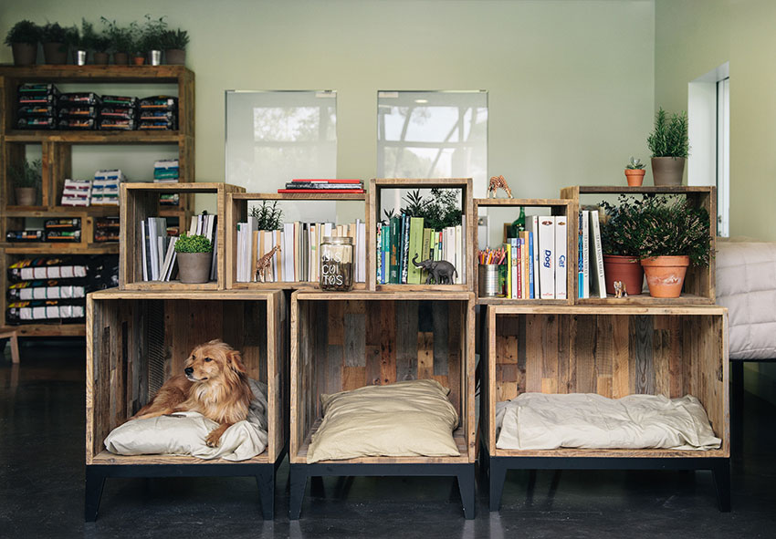 Pet Hospital by Ark.studio | Yellowtrace