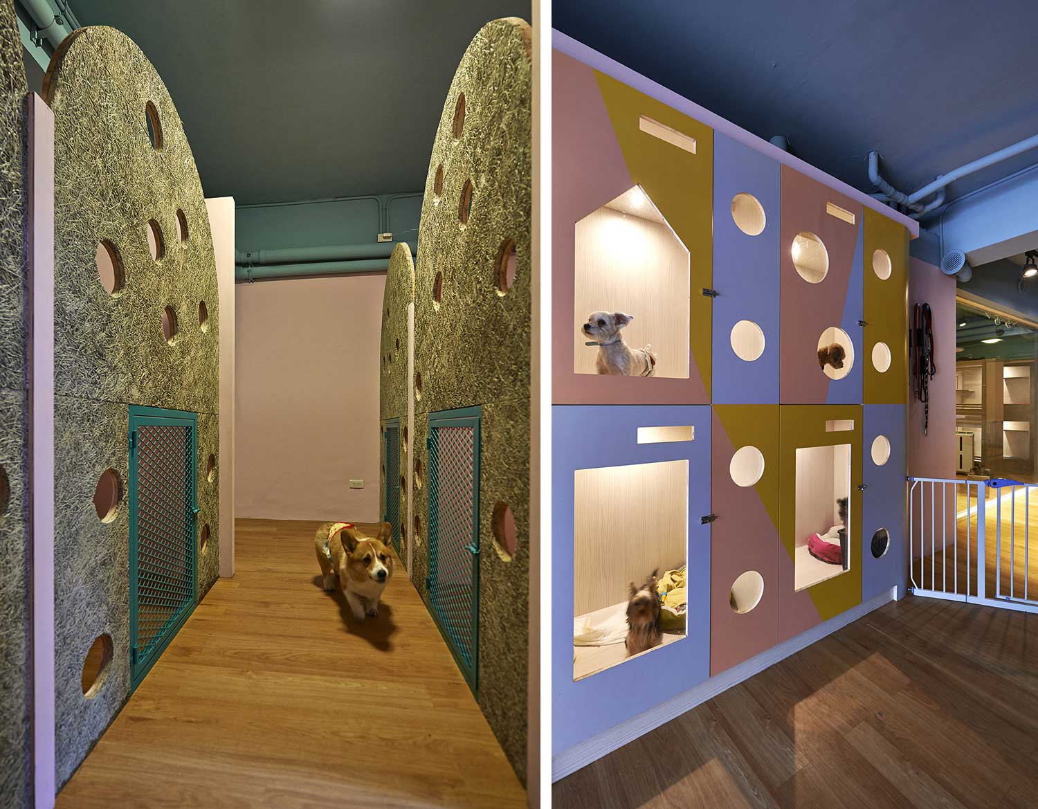 Petaholic Hotel by sms Design | Yellowtrace