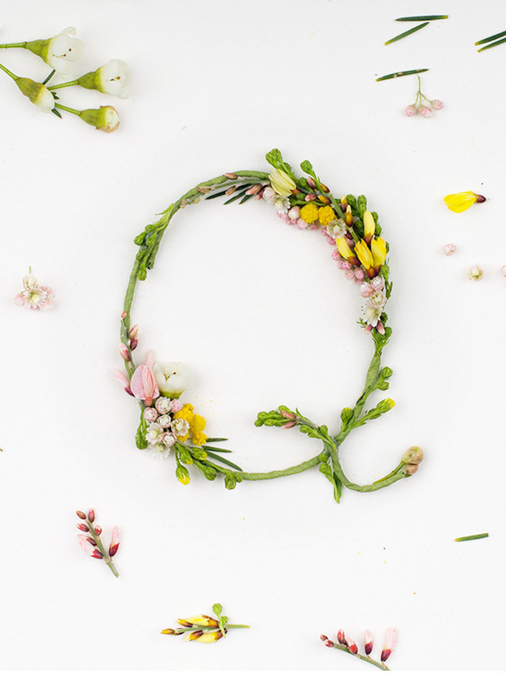 Alice Mourou Blossom Type   Yellowtrace
