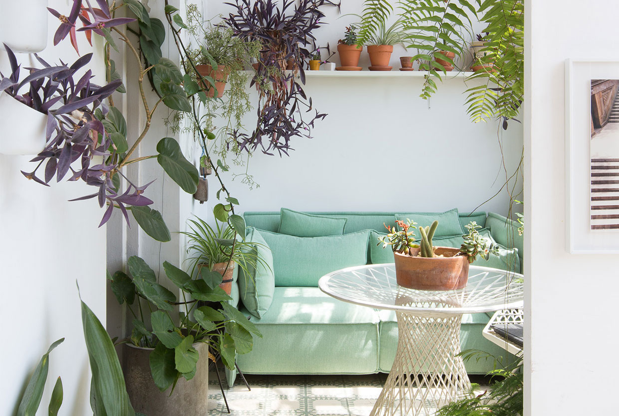 Greenterior plant loving creatives and their homes yellowtrace.jpg