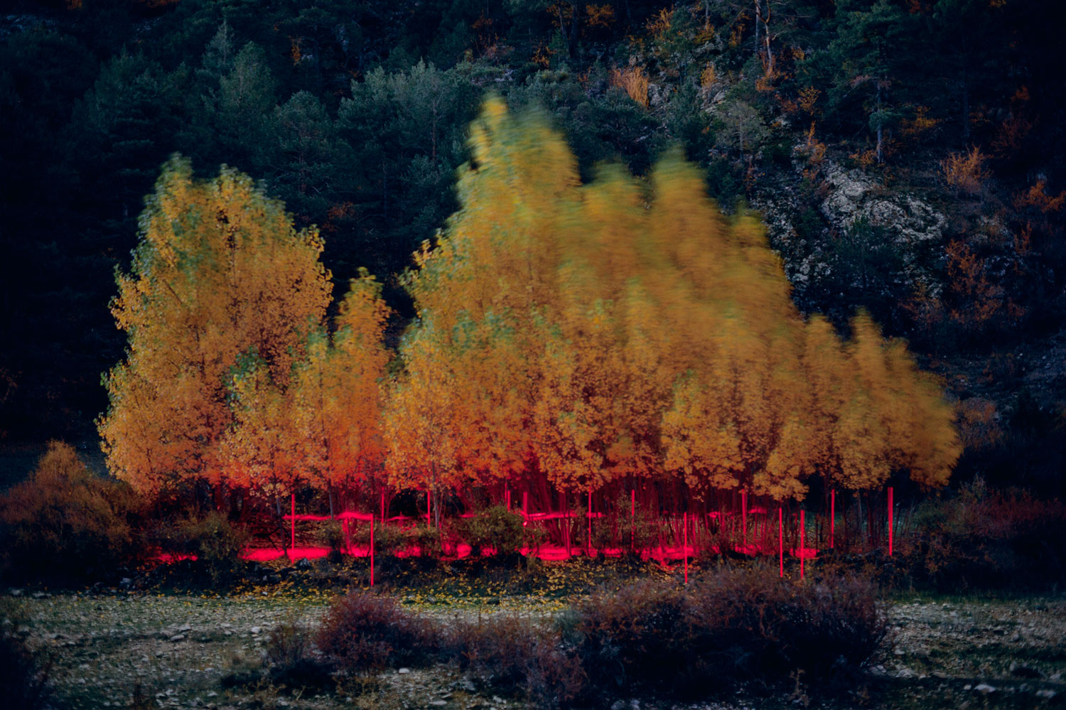 Captivating Light Installations in Nature by Nicolas Rivals | Yellowtrace
