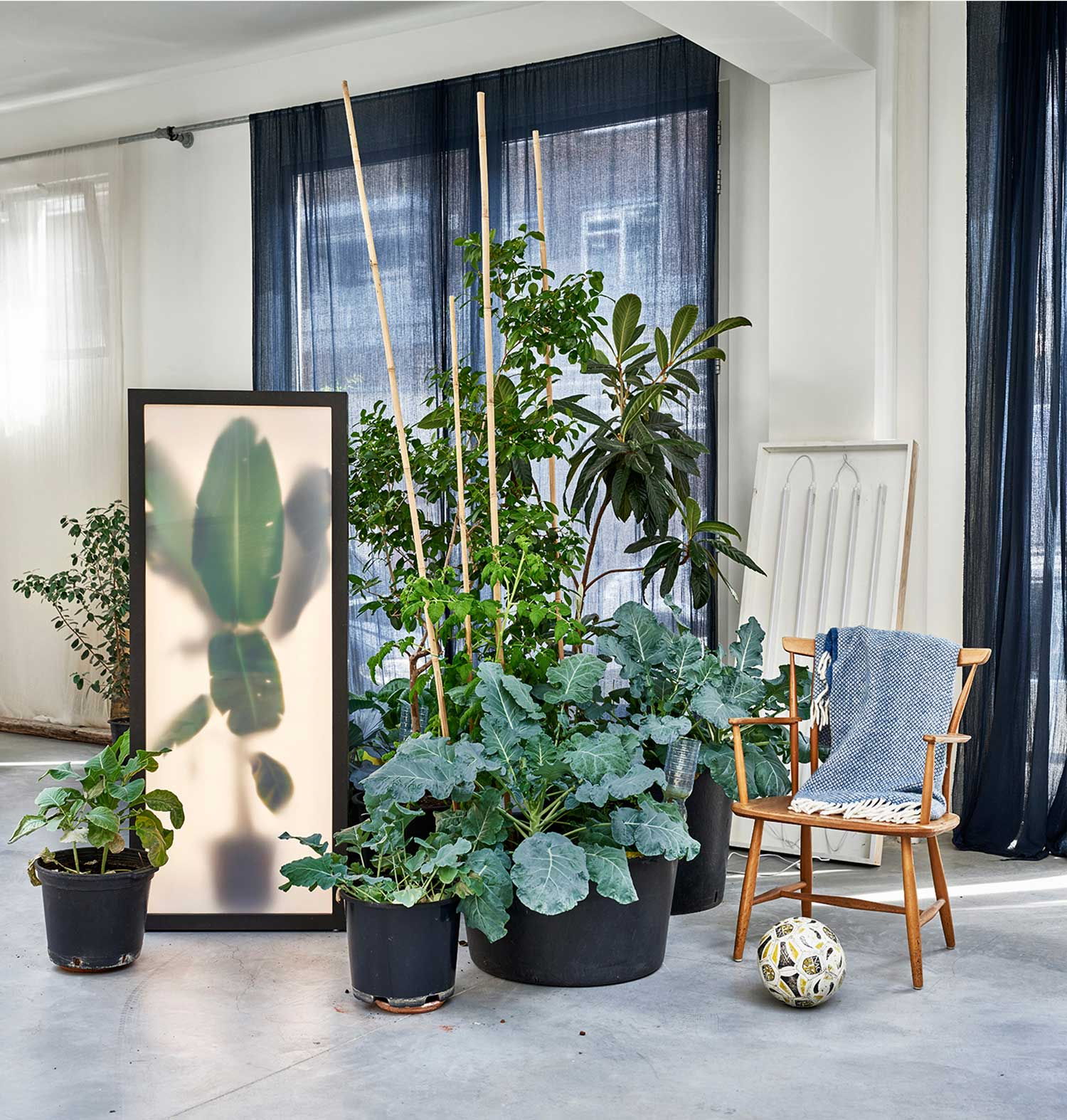 Growing plants indoor by rem atelier yellowtrace - Large plants for indoors ...