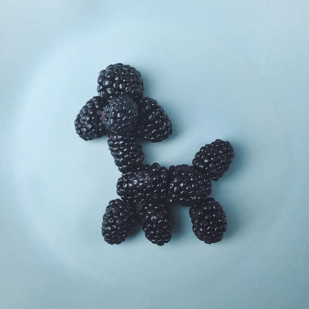 Blackberry Poodle by Brock Davis | Yellowtrace
