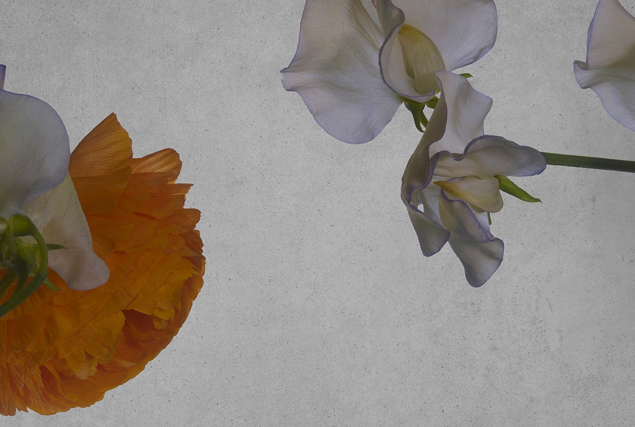 STEMS: Collaboration Between Still Life Flowers & Rebecca Scheinberg | Yellowtrace