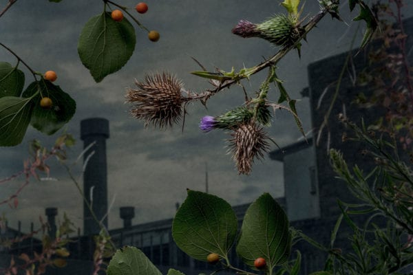 Daniel Shipp's Photography Exhibition 'Botanical Inquiry' | Yellowtrace