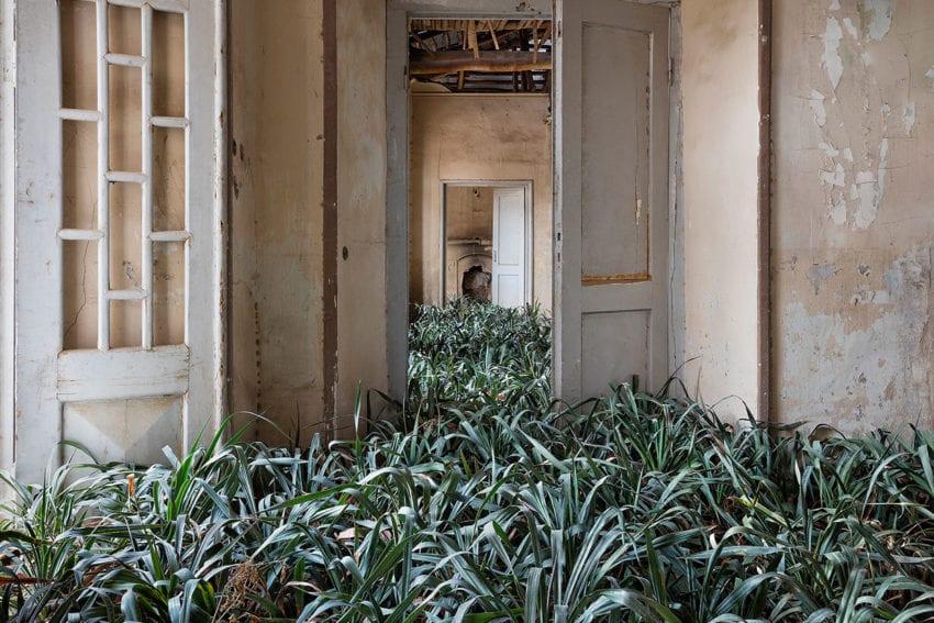 Iranian Abandoned & Overgrown Homes Captured by Gohar Dashti   Yellowtrace