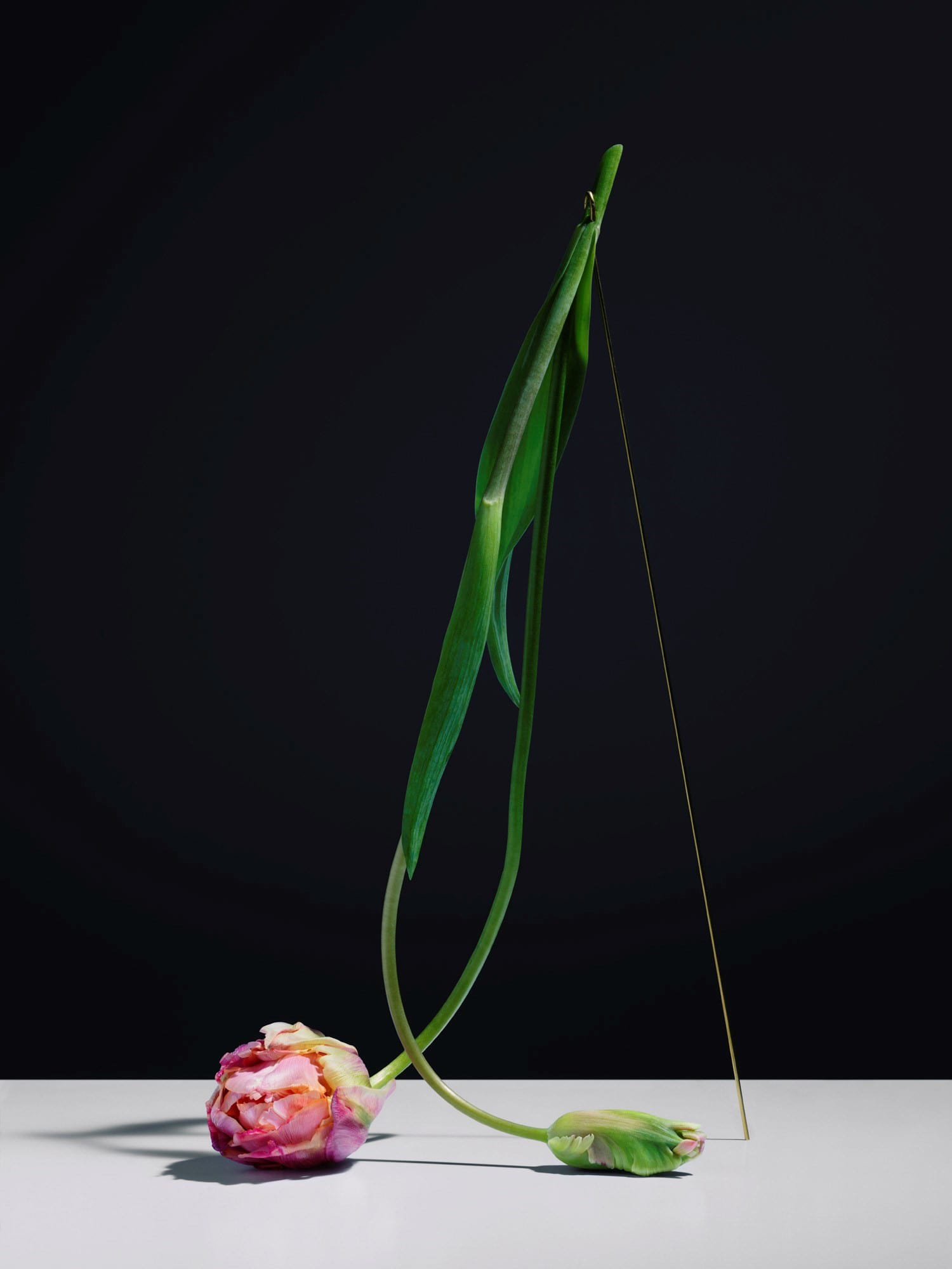 Carl Kleiner Short Film Elevates Dying Tulips Into Art | Yellowtrace
