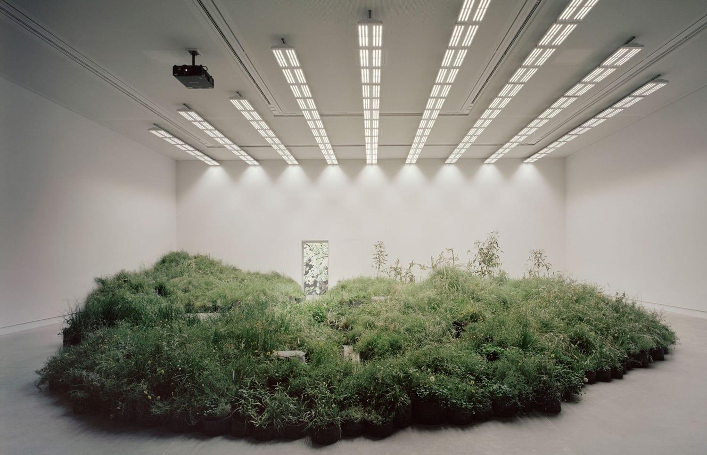 Grassland Repair at The Australian Pavilion, Venice Architecture Biennale 2018 | Yellowtrace