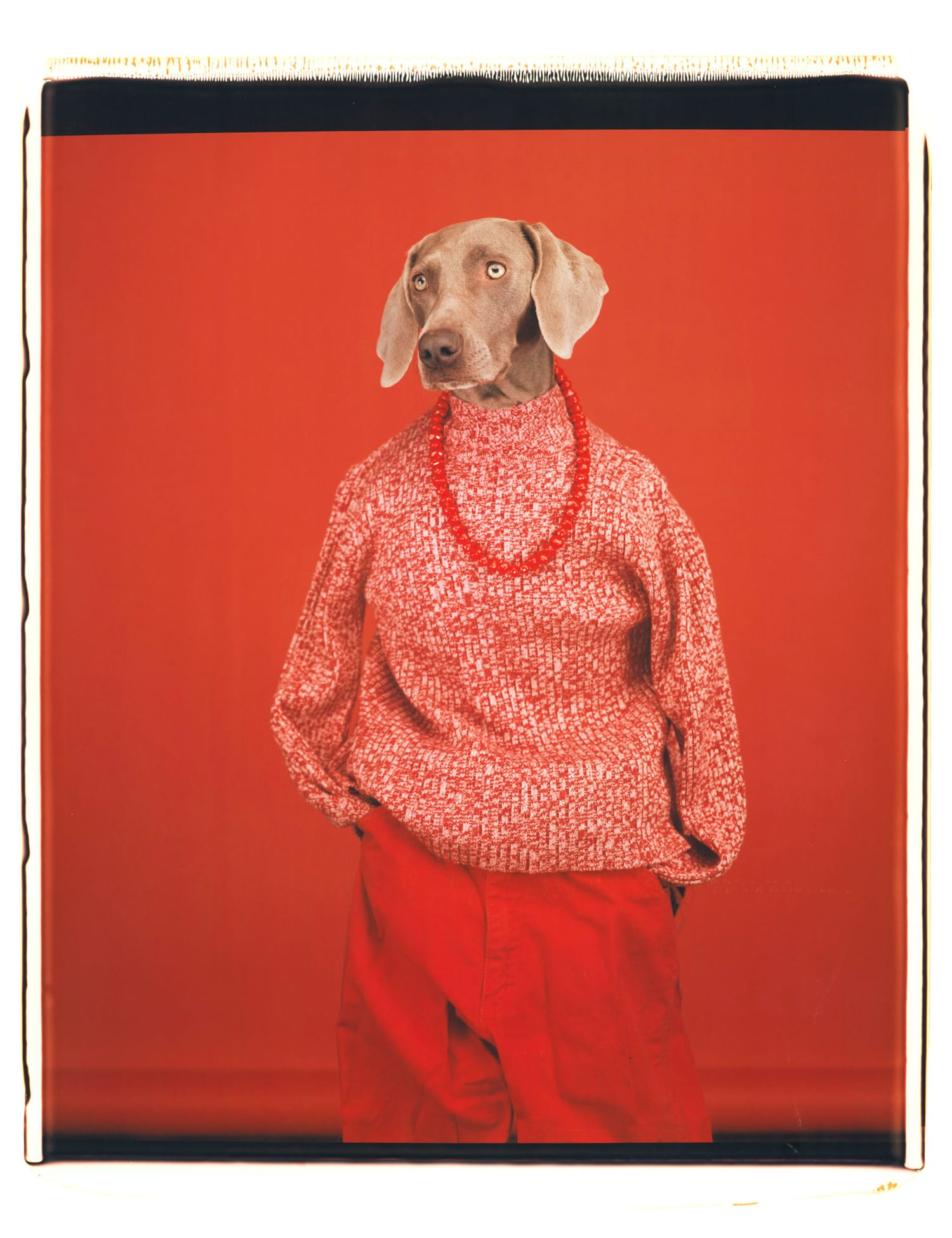 Being Human: William Wegman's Striking & Surreal Portraits of Weimaraner Dogs | Yellowtrace