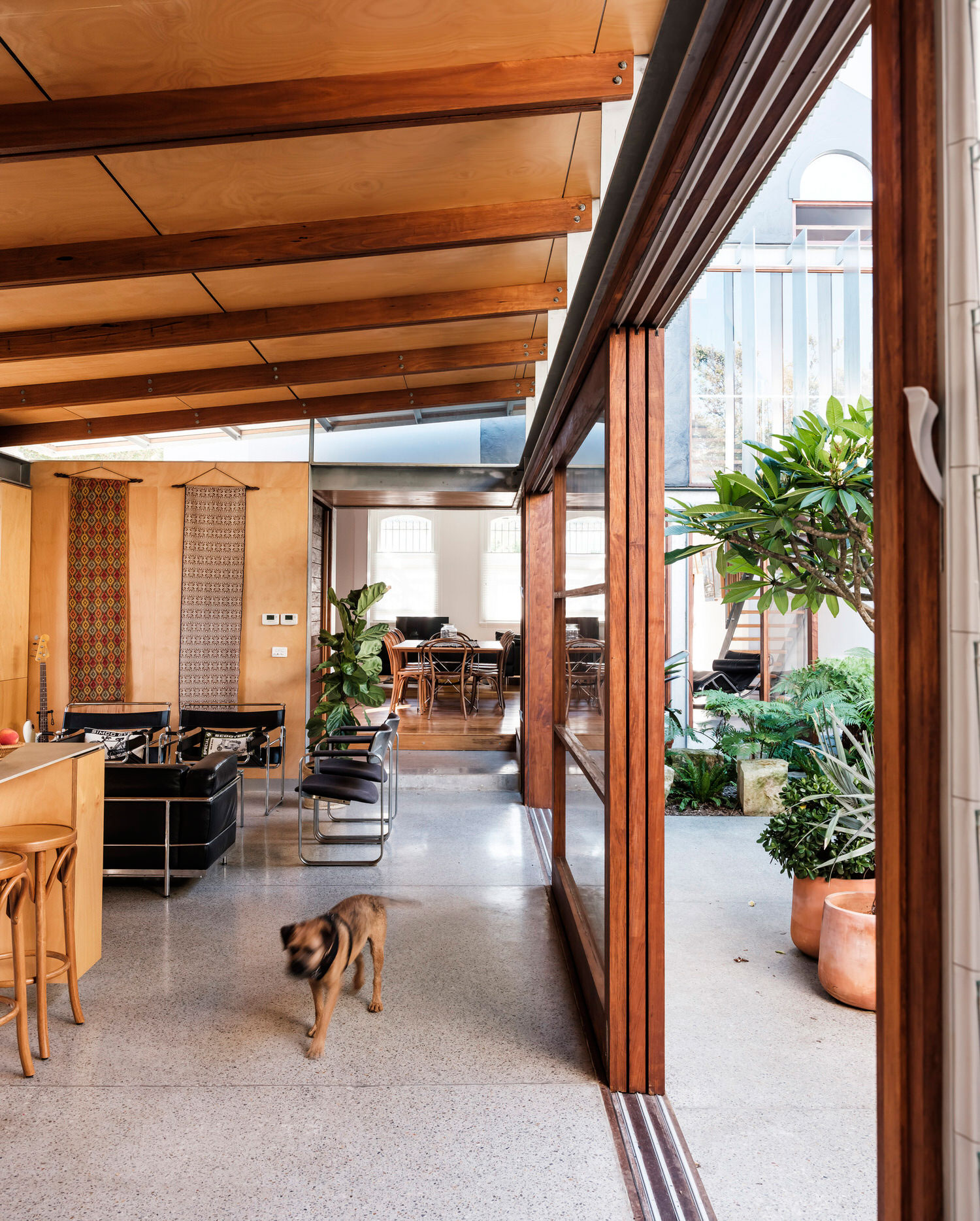 Courtyard House in Glebe by Joe Agius / Cox Architecture, Alterations & Additions, Photo Robert Walsh | Yellowtrace