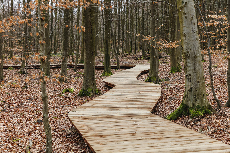 EFFEKT Camp Adventure, Danish Forest, Photo Rasmus Hjortshoj | Yellowtrace