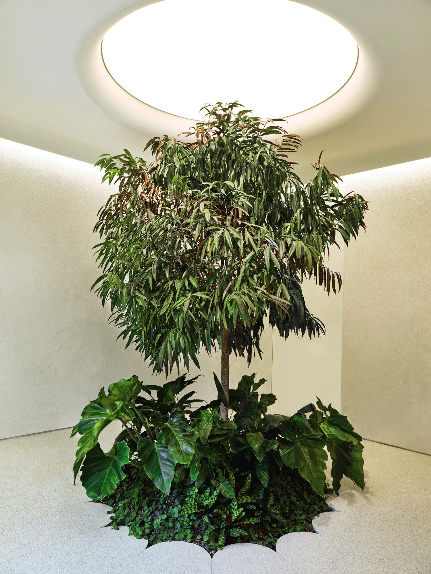 High Design: Alchemy Cannabis Dispensary in Toronto by Studio Paolo Ferrari.