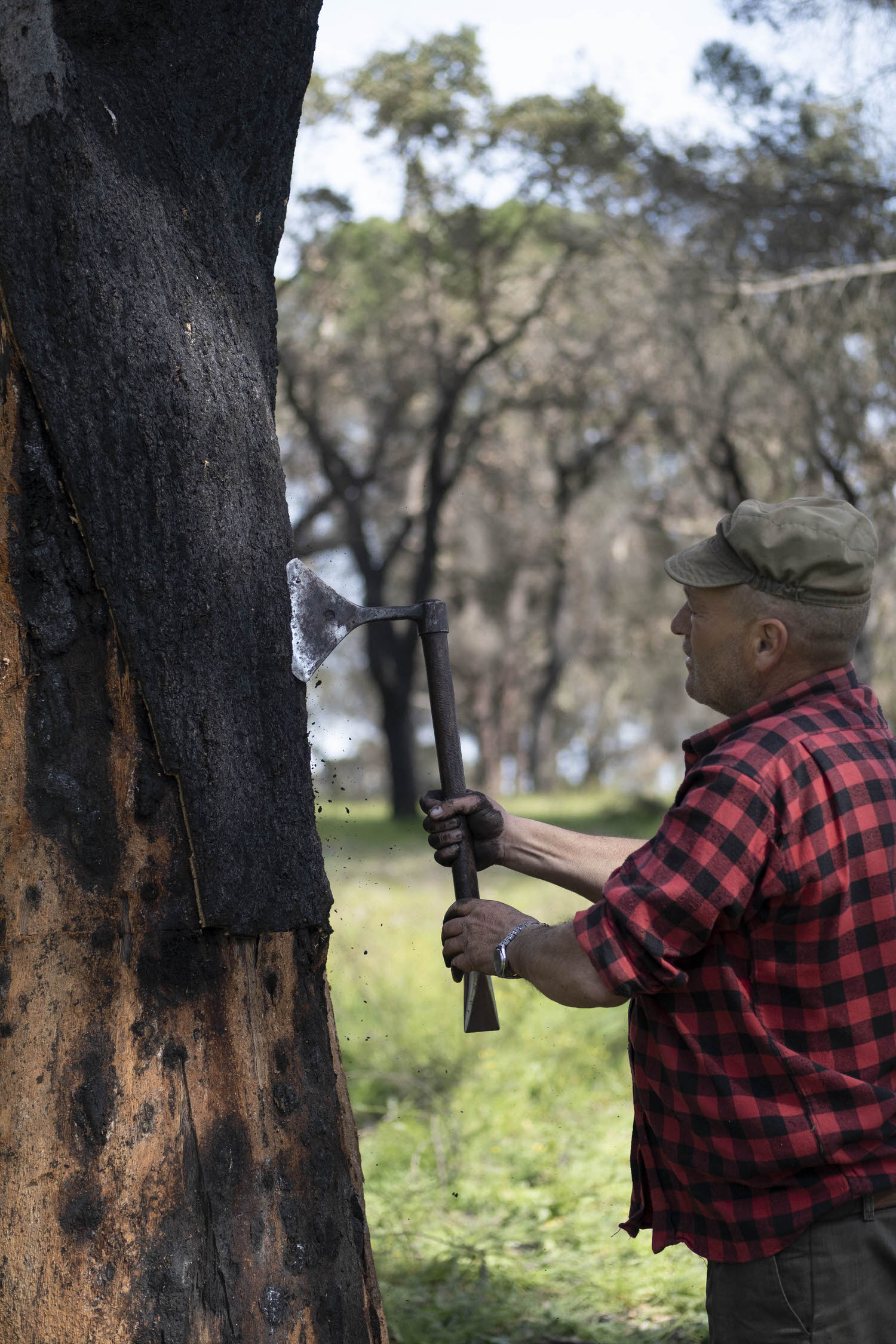 Noe Duchaufour Lawrance Burnt Cork Harvesting Made In Situ Yellowtrace 20